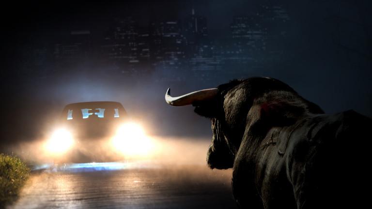 bull-in-headlights